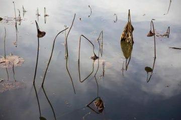 """""""Hatcher's Pond"""" (2010) by Lucinda Bunnen."""