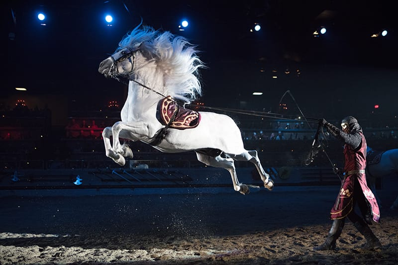 Medieval Times horse capriole