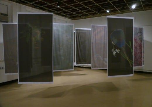 Cynthia Farnell's installation Metamorphoses.