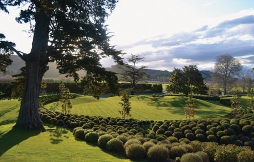 Earthworks Garden, Orango Station, New Zealand. Inspired by and framing terraced hills, it is planted with varieties of native hebe to provide a diversity of texture and blooms. photo: NBW