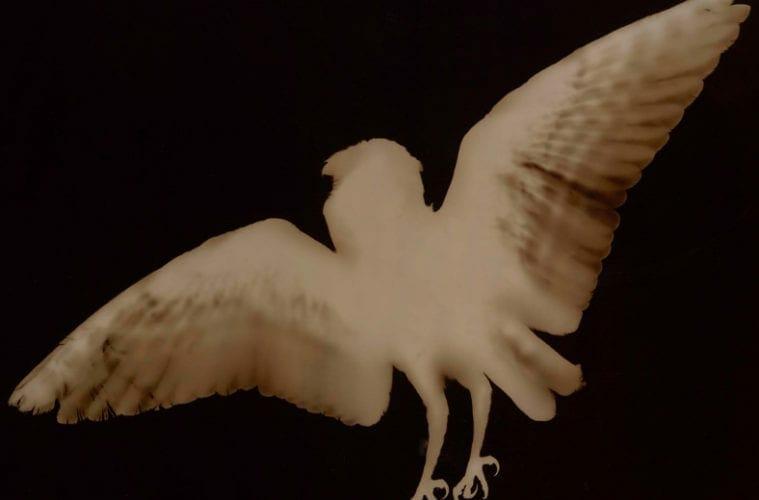 "Three Billion exhibit at the Hudgens; ""Barn Owl"" by Kate Breakey."