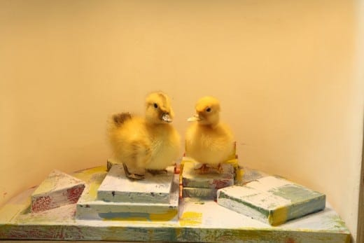Joe Peragine: Sitting Ducks Diorama  2015, mixed media and taxidermy diorama