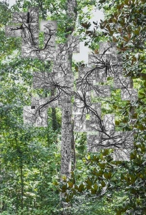 Lucinda Bunnen: A Collection of Tree Photos Assembled on a Window