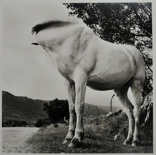 Alen MacWeeney: White Horse, Donegal, 1965-1966, gelatin silver print.